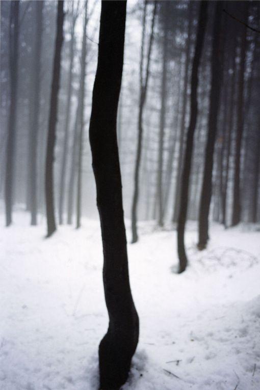 Bosque, árboles, fundación Mapfre
