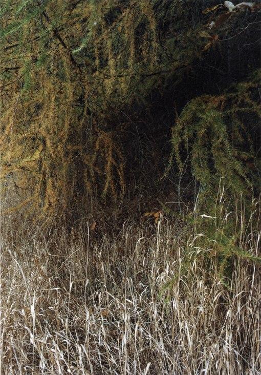 bosque, ramas, naturaleza