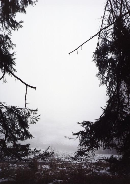 bosque, forest, ramas, árboles