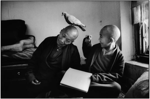 monje budista, paloma, niño reencarnado