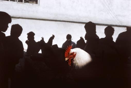 Gallo en el mercado de Alay. Gueorgui Pinkhassov