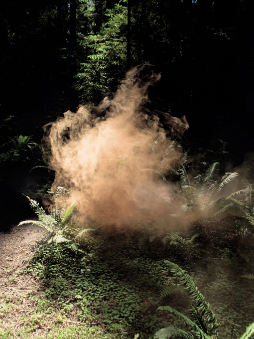 Delaney Allen. In Visibility